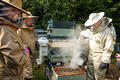 The CSBKA monitor the health of the colonies in the apiary