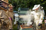 Central Sussex Beekeepers Association