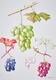 Botanical Art by Jill Coombs