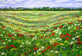John Thompson: Poppy Meadow