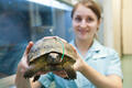 A 77 year old turtle is treated at Seers Croft